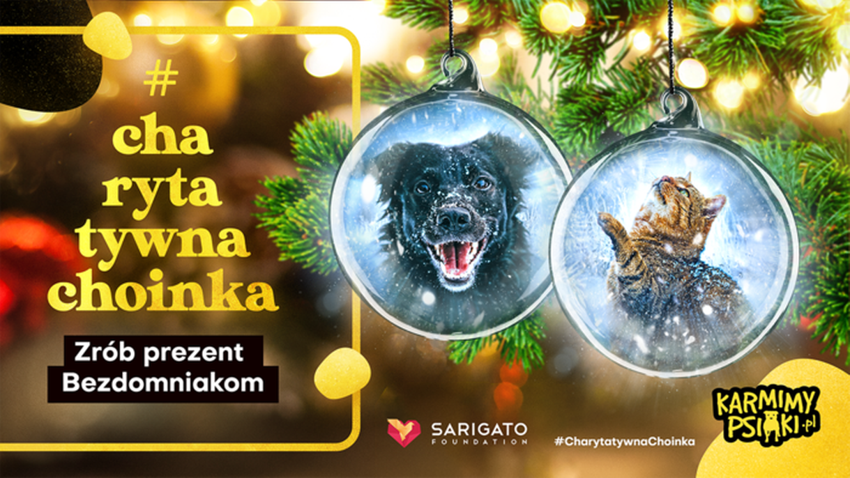 Wysyłamy prezenty bezdomnym zwierzakom - #CharytatywnaChoinka ruszyła po raz kolejny!